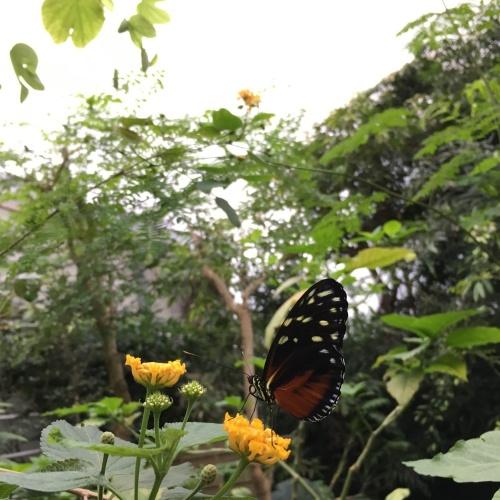 Alaris Schmetterlingspark Wittenberg